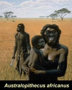 Australopithecus africanus | Modern Human Origins