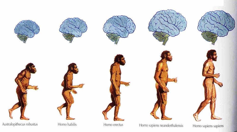 Homo Sapiens - Modern Human Origins